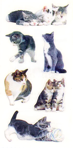 Who doesn't love  kitties?!