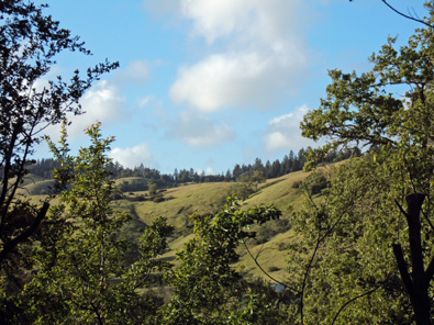 A shot from the southern slope, showing the amazing view. (That is,  if I cut done a few trees.)