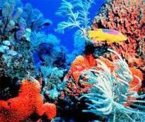 healthy_coral